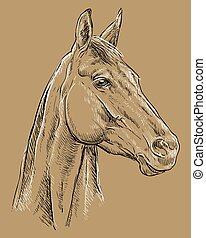 barna ló, 25, portré