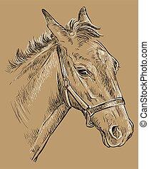 barna ló, 26, portré