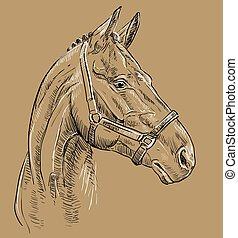 barna ló, 27, portré