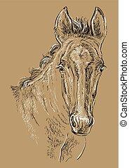 barna ló, 29, portré