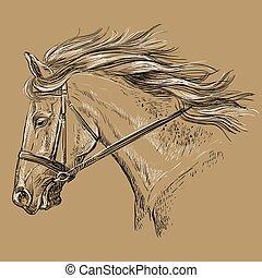 barna ló, 30, portré