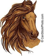 barna ló, arab, portré