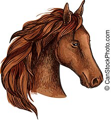 barna ló, csődör, fej, skicc