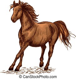 barna ló, csődör, lóverseny, arab, galoppozó