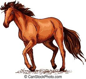 barna ló, csődör, skicc, amerikai félvad ló