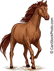 barna ló, csődör, skicc, futás, arab
