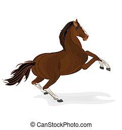 barna ló, csődör, vad