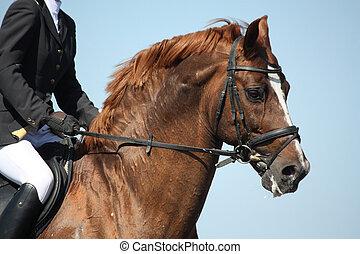 barna ló, előadás, közben, portré, sport