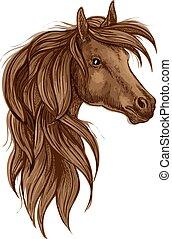barna ló, fej, elszigetelt, arab, skicc