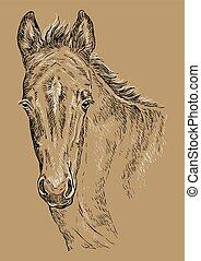 barna ló, portré, 28