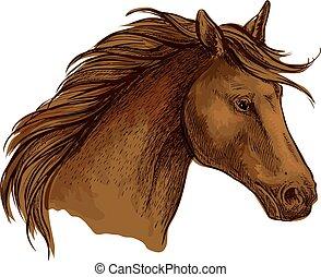 barna ló, versenyló, csődör, skicc, arab