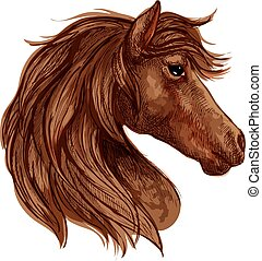 barna ló, versenyló, fej, arab, skicc