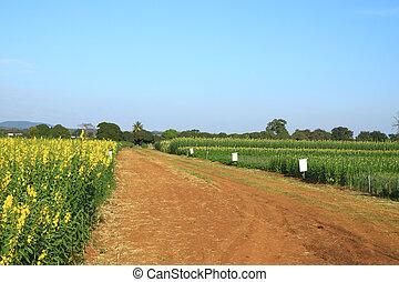 barna, ország út, farm.