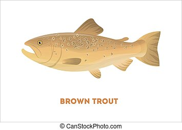 barna pisztráng, elszigetelt, fish.
