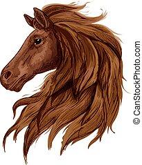 barna, skicc, csődör, fej, arabian ló