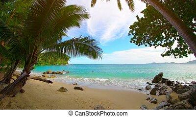 """beautiful, homok, pálma, fehér, trees"", tropical tengerpart"