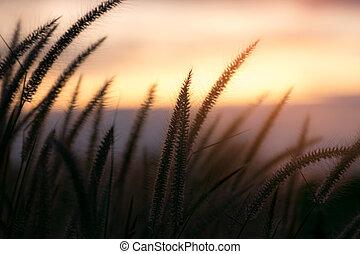 becsuk, virág, fű, feláll