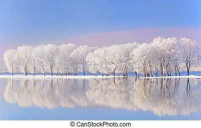 befedett, fagy, tél fa