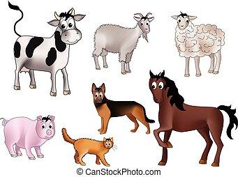 belföldi állat
