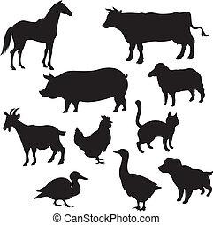 belföldi, körvonal, állatok