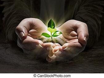 berendezés, fogalom, fény, kézbesít