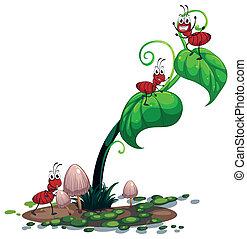berendezés, zöld, hangya