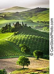 berkek, tanya, szőlőskert, olajbogyó