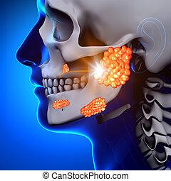 betegség, parotid, -, /, mirigy, mumps