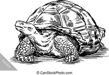 bevés, tengeri teknős, rajzol, tinta, ábra