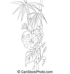 bindweed, virág, bamboo.