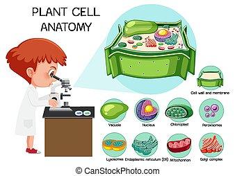 (biology, berendezés, diagram), anatómia, sejt