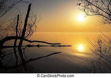 bitófák, lake., reggel, elágazik, gyönyörű, táj, napkelte