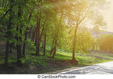 bitófák, zöld erdő