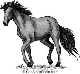 black ló, arab, csődör, skicc