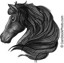 black ló, csődör, fej, skicc