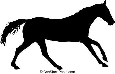 black ló, fehér, amerikai félvad ló, árnykép, háttér