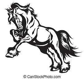 black ló, fehér