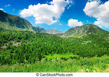blue hegy, ég, erdő, befedett