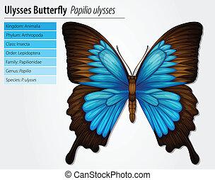 blue hegy, swallowtail