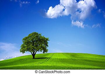 blue zöld, ég, táj, természet