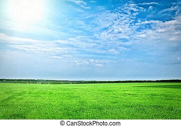 blue zöld, fű, ég, alatt