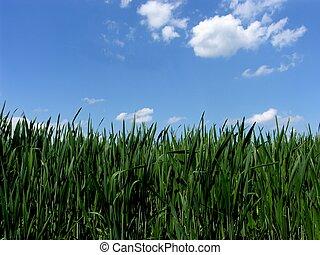 blue zöld, fű, ég, friss