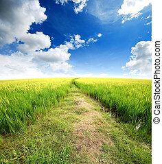 blue zöld, fű, ég