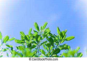 blue zöld, felett, fa, ég
