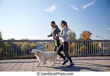 boldog, szabadban, futás, kutya, párosít