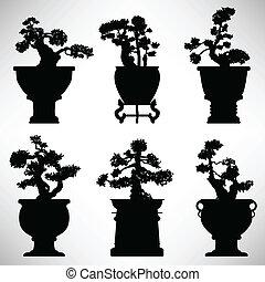 bonsai, berendezés, virág, fa, edény