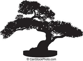 bonsai fa, árnykép