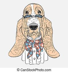 borzeb, furcsa, kutya, vektor, csípőre szabott, vadászkutya, karikatúra