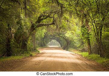 botanika, moha, piszok, sziget, tölgy, út, bitófák, öböl, ültetvény, él, mély, edisto, spanyol, sc, charleston, déli, erdő