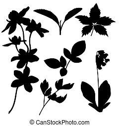 botanikai, vektor, állhatatos, silhouettes.